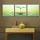 Stretched Canvas Print Art Botanical Sprout Set of 3