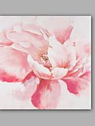 Picturi florale / botanică