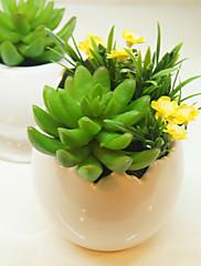 """5.1 """"H Modern Style sukulentních rostlin v keramické vázy"""