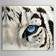 Hand Painted Oil Painting Animal 1304-AN0095