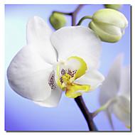 tryckt duk konst blommig orkidé genom flowerphotos med sträckt ram