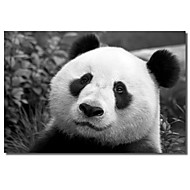 Printed Canvas Art Animal Giant Panda by SD Smart with Stretched Frame