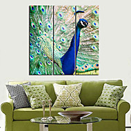 Reproducción en lienzo de Arte Animal agraciada del pavo real Set de 3