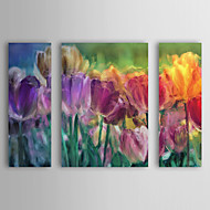 Stretched Canvas Art Botanical Tulip Farm by Mindy Sommers Set of 4