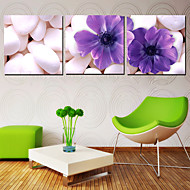 Stretched Canvas Art Botanical Purple Petals on Cobbles Set of 3