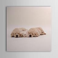 Reproduction transférée sur toile Art Animalier chiens somnolents par Interlitho Designs