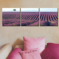 Stretched Canvas Print Art Landscape Field of Lavender Set of 3