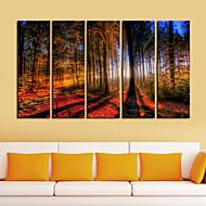 Stampa trasferimenti su tela di arte Paesaggio Bosco a Sunrise Set di 5