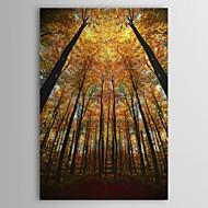 Trasferimenti su tela Art all'inizio dell'autunno da Philippe Sainte