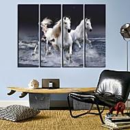 Trasferimenti su tela di arte animale Un Pentium Cavallo Set di 4