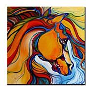 Leinwandkunst Colour Of The Horse