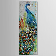 Hand Painted Oil Painting Animal Knife Painted Peacock  with Stretched Frame