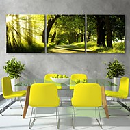 Personalized E-HOME® Canvas Print The Forest Trail 30x30cm 40x40cm 60x60cm Framed Canvas Painting Set of 3