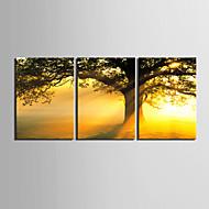 e-home® strukket lerret kunst solnedgang under treet dekormaling sett med 3