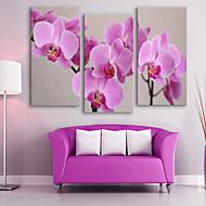 E-home® 3 tuval sanat pembe çiçeklerin boyama seti gergin