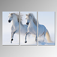 Animal / Ocio / Fotográfico / Moderno / Romamticismo / Pop Art / Viaje Impresión de la lona Tres Paneles Listo para colgar , Vertical