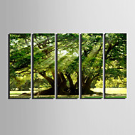 Canvas Set Landschap Europese Stijl,Vijf panelen Canvas Verticaal Print Art wall Decor For Huisdecoratie