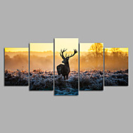 Canvas Set Ingelijste canvas Dieren Modern,Vijf panelen Canvas Horizontaal Print Art wall Decor For Huisdecoratie