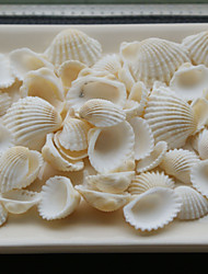 Wedding Décor Small Beach Themed Assorted Color Shells - Set of 4 Packs (90 pieces/Pack)