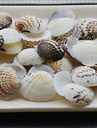 Wedding Décor Beach Themed Shells - Set of 4 Packs (40 pieces/Pack)
