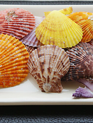 Wedding Décor Beach Themed Assorted Color Shells - Set of 4 Packs (28 pieces/Pack)