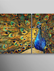 Hand Painted Oil Painting Animal Peacock Spreads Its Tail with Stretched Frame Set of 2 Ready to Hang