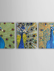 Hand Painted Oil painting Animal Peacock with Stretched Frame Set of 3