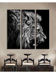 Personalized Canvas Print Ferocious Lion 24x70cm  30x90cm  33x100cm  Gallery Wrapped Art  Set of 3