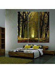 Personalized Canvas Print Stretched Canvas Art Secret Forest 24x70cm  30x90cm  33x100cm  Gallery Wrapped Art Set of 3