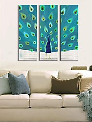 Stretched Canvas Art The Peacock  Set of 3