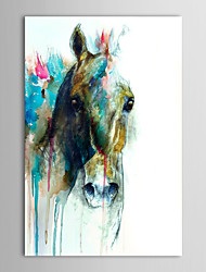 Hand Painted Oil Painting Animal Abstract Horse Head with Stretched Frame Ready to Hang
