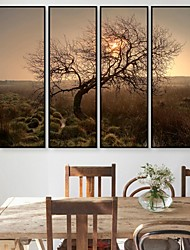 The Setting Sun Shade Framed Canvas Print Set of  4