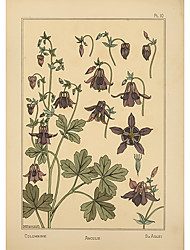Red Aquilegia Flower Roller Shade
