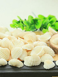 Qihang Natural Shell Photography Props(5 PCS)