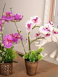 "9,8 ""11,8 l"" h phalaenopsis cru dans un pot en rotin bronze en plastique"
