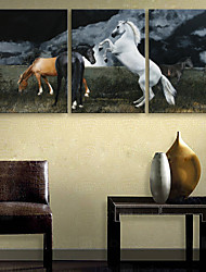 E-HOME® Stretched Canvas Art Fine Horse Decorative Painting Set of 3