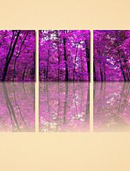 visuelle impression star®forest de toile d'arbre en haute qualité 3 pannel toile prête à accrocher