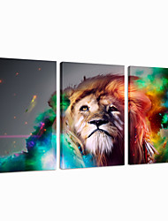 VISUAL STAR®Lion Wall Decoration Art Triptych Animal Canvas Printing Ready to Hang