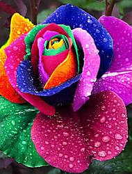 200 pcs sementes arco-íris holland raro rosa sementes de flores