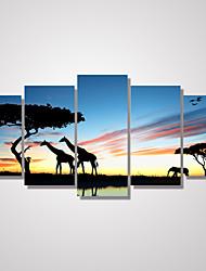 Пейзаж Отдых Животное Фото Классика,5 панелей Горизонтальная С картинкой Декор стены For Украшение дома