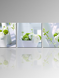 VISUAL STAR®Green and White Flower Picture Print on Canvas 3 Panel Canvas Wall Art for Home Decor Ready to Hang