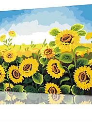 DIY digitales Ölgemälde Frame Familie Spaß Malerei alle von mir Sonnenblumen x5002