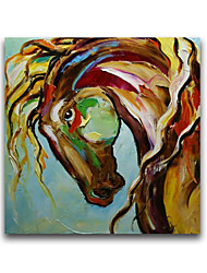 Horse Head Animal Oil Painting Products for New Design Cheap Price Free Shiping