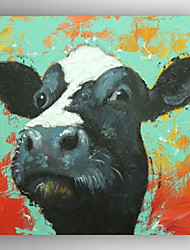 Oil Painting Black Cow's Head Hand Painted Canvas with Stretched Framed Ready to Hang
