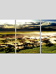 Canvas Set Of 3 Modern Wall Painting Horse Canvas Art Pictures Print Painting Home Decor For Living Room