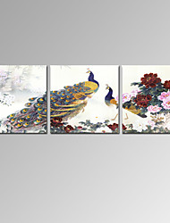 VISUAL STAR®3 Panel Beautiful Peacock Canvas Prints Peony Floral Wall Art Ready to Hang