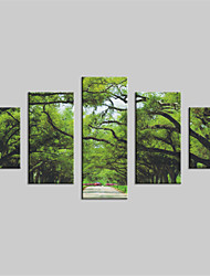 JAMMORY Canvas Set Landscape Modern,Five Panels Gallery Wrapped, Ready To Hang Vertical Print No Frame Green Trunk