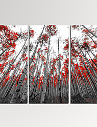 VISUAL STAR®3 Panel Forest Photos Print on Canvas Wall Decoration Landscape Wall Art Ready to Hang