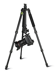 DPOTORPADPSYS248 Photographer SLR Camera Tripod Camera Tripod Head Portable Phone