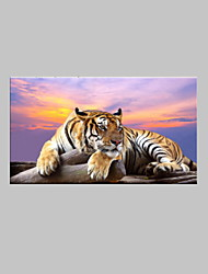 VISUAL STAR®Tiger Animal Canvas Art Giclee Print Sunset Photo Canvas Printing Home Goods Wall Art Canvas